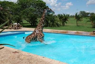 cryo_girafe